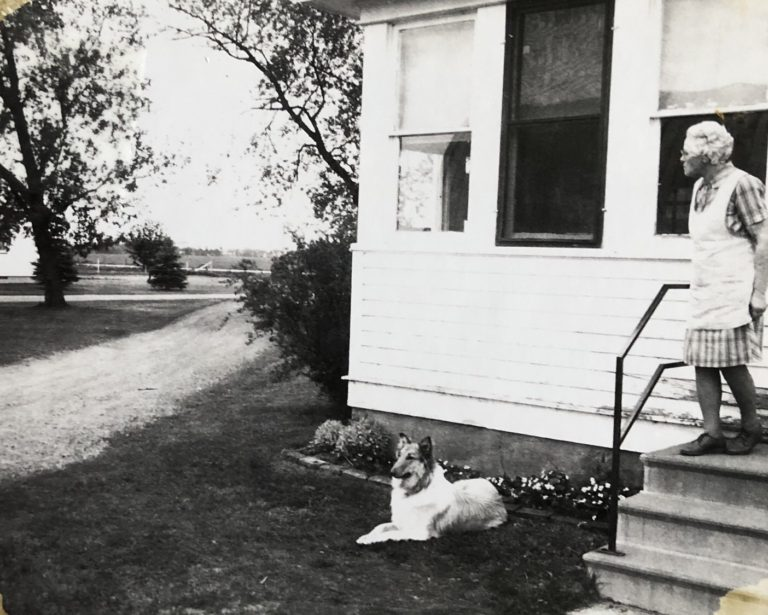Collie laying by the porch on dairy farm