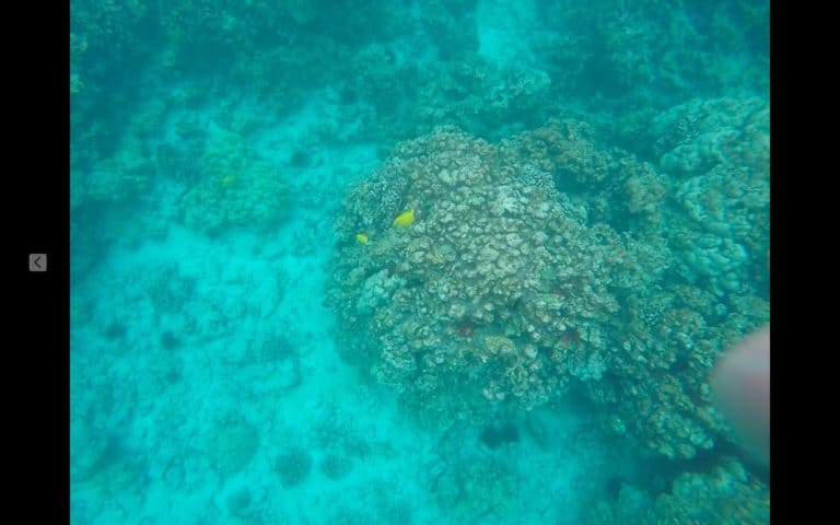 close up view of the best snorkeling on the Big Island